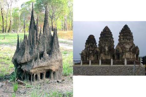 termite combo